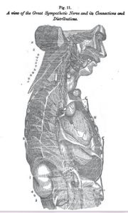 nerve connections